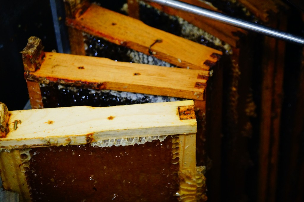 Straight from the combs of our colonies: Raw, Natural, Tennessee Honey
