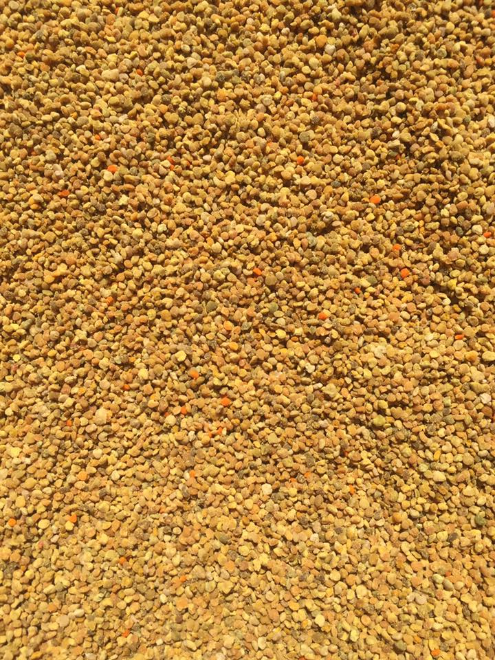 Freshly collected bee pollen ready to be bottled.