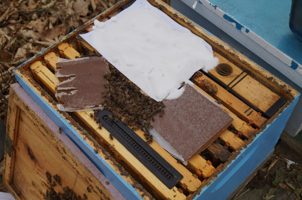 Winter Feeding: Its better to feed dry foods for bees when you want to prevent them from starving, but don't want them to start raising alot of brood. Here I have placed dry sugar and pollen patties (which contain mostly sugar), on the top bars. The inner cover is flipped over to make enough room, but a larger spacer instead would allow more food. Mixing a small amount of water with the sugar to make a paste works well too.